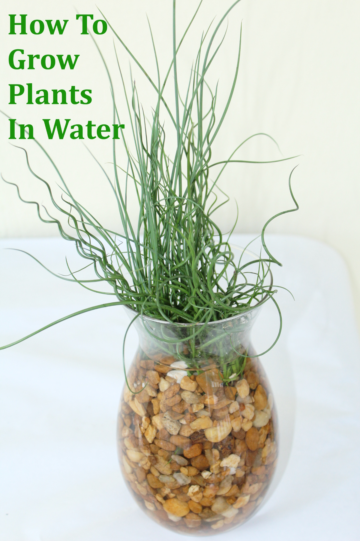 How to grow plants in water indoors princesstafadzwa for What plants can i grow indoors